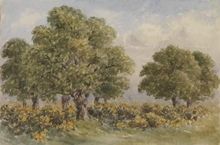 OAK TREES AMID GORSE by White, George