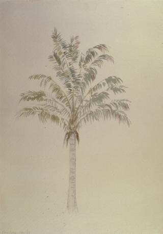 TREE STUDY by White, George