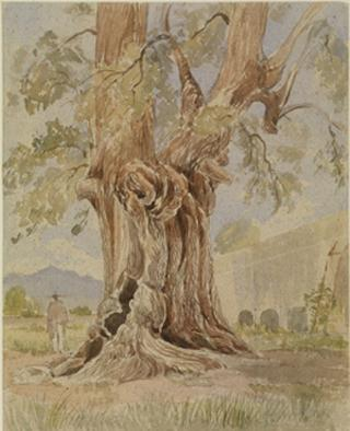 TREE TRUNK IN LANDSCAPE WITH WALL by White, George