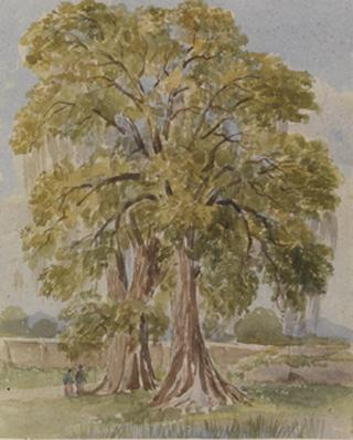 TWO TREES IN LANDSCAPE WITH WALL by White, George